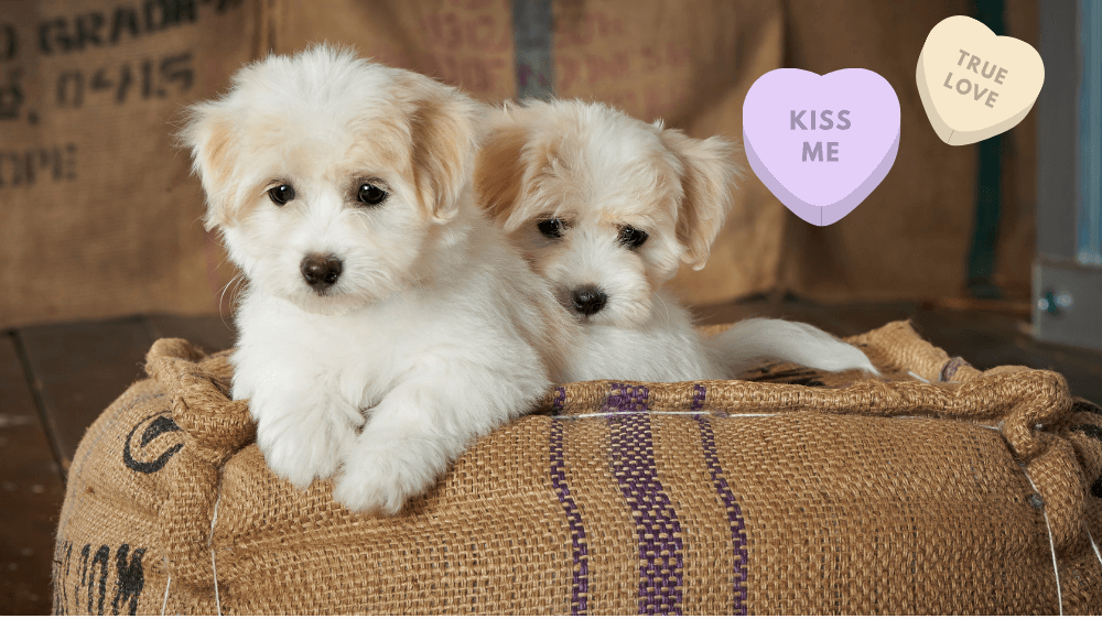 The Best Valentine's Day Gift for Dogs