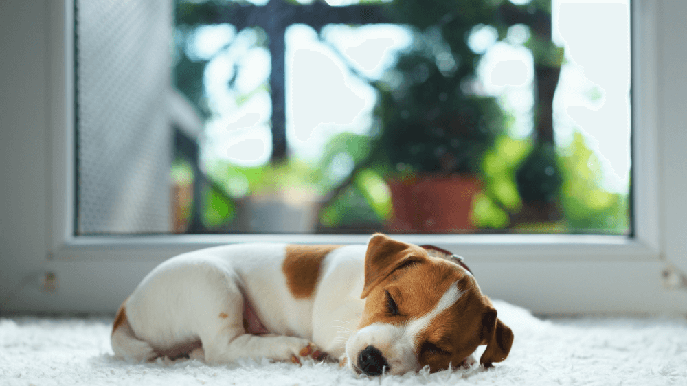 blog-3-key-tips-caring-new-puppy